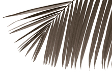 Wall mural - Palm Leaves - Sepia