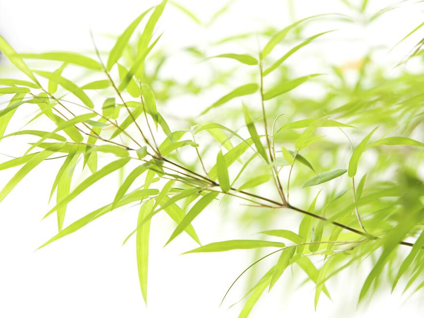 miniature bamboo fototapeter tapeter photowall. Black Bedroom Furniture Sets. Home Design Ideas