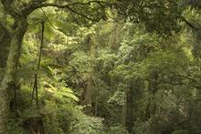Fototapet - Jungle Scene