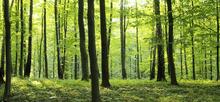 Fototapet - Rural Forest