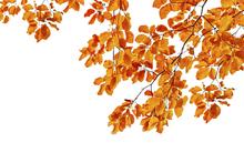 Fototapet - Orange Leaves