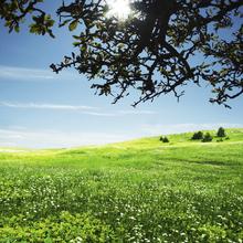 Fototapet - Green Meadow