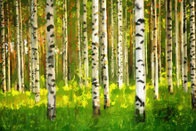 Wall mural - Birch Forest - Oil Painting
