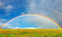 Fototapet - Rainbow Over Field