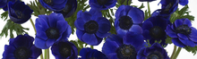 Canvastavla - Panoramic Flowers - Blue