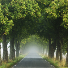 Canvas print - Misty Allee