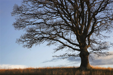 Canvas print - Alone Tree
