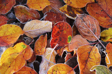 Wall mural - Colorful Leaves