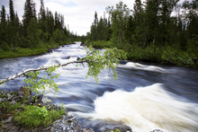 Canvastavla - Lapland River