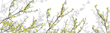 Wall mural - Mountain Birch Green