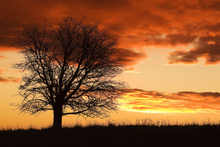 Wall mural - Tree in Sunset