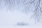 Wall Mural - Foggy Winter