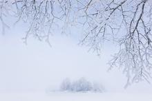 Fototapet - Foggy Winter