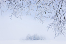 Canvas print - Foggy Winter
