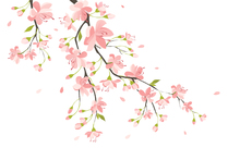 Wall mural - Branch with Pink Flowers