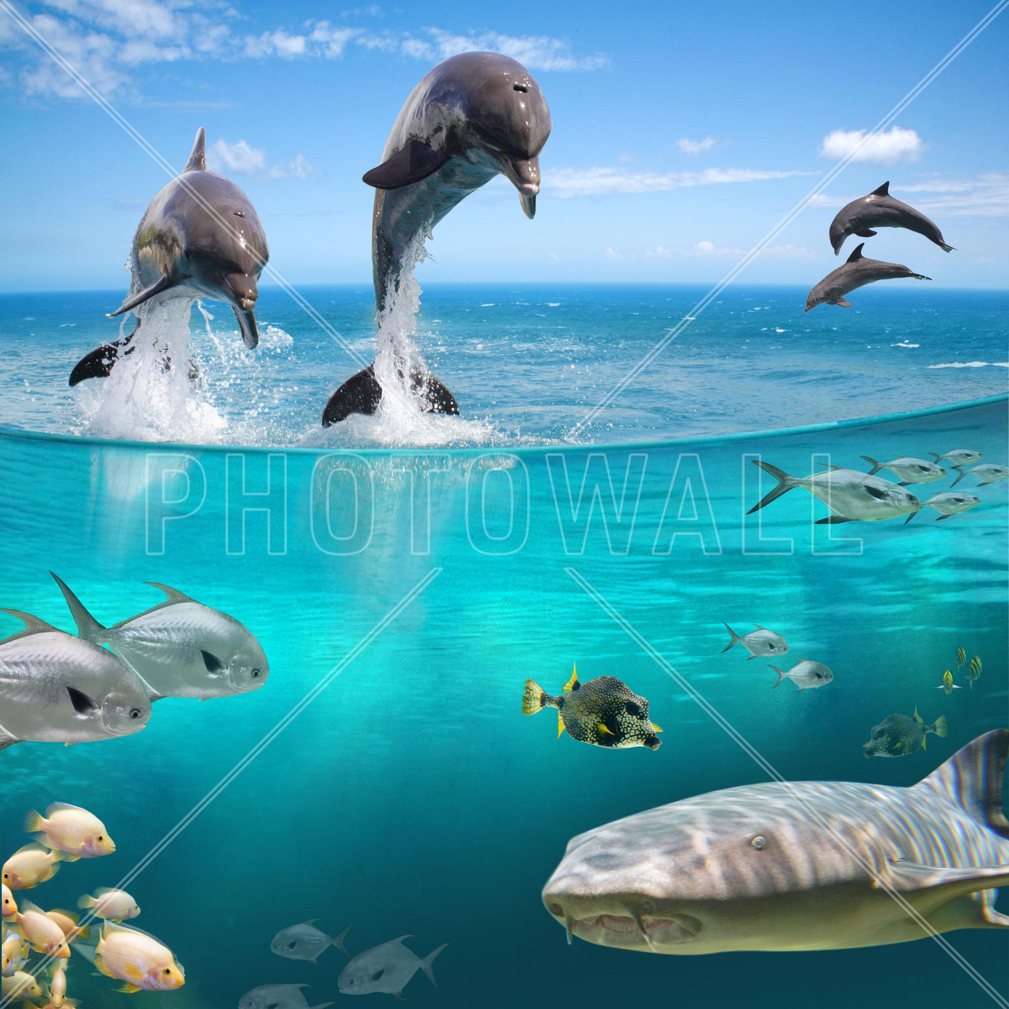 Sea Life Part 61