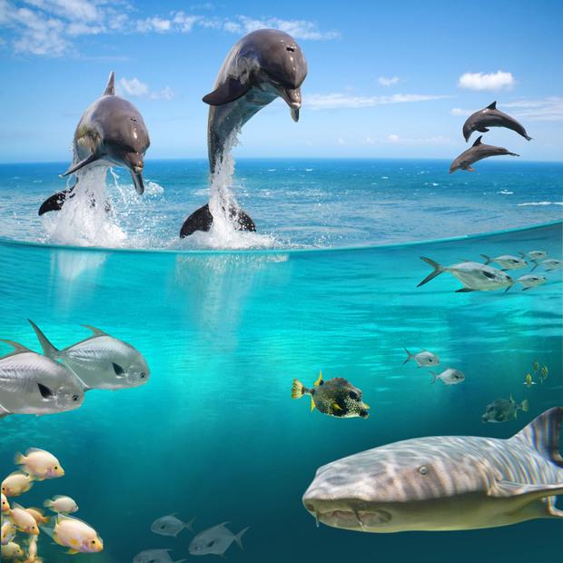 sea life wall mural photo wallpaper photowall