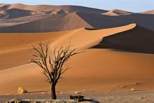 Fototapet - Bright Desert