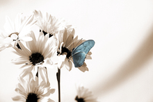 Canvas print - Julia Butterfly - Blue