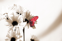 Wall mural - Julia Butterfly - Sepia Deep Red