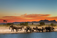 Fototapet - Herd of Elephants