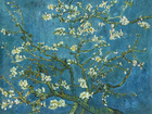 Wall mural - Almond Blossom