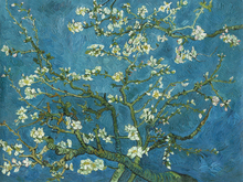 Canvas print - Almond Blossom