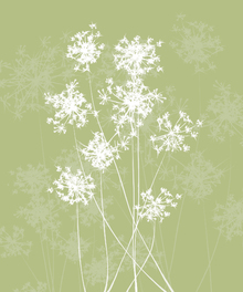 Canvas print - Dandelions - Green