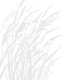 Canvas print - Grass - Light Grey