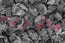 Wall mural - Frosty Leaves Red