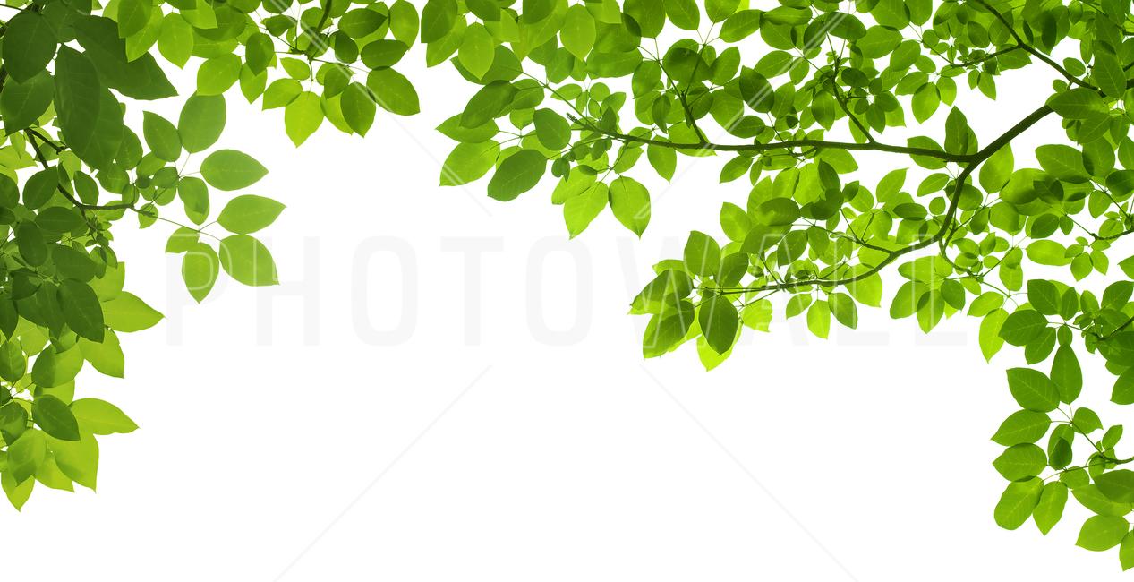 Frame of Leaves - Wall Mural u0026 Photo Wallpaper - Photowall