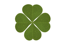 Wall mural - Four Leaved Clover