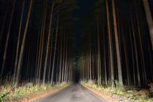 Canvastavla - Forestroad in the Night