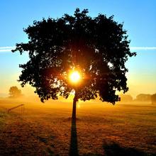 Fototapet - Sunrise on a Meadow