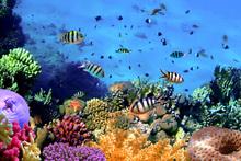 Wall mural - Coral Reef at Koh Cahg Island