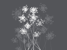 Wall Mural - Dandelion Grey