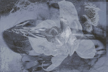 Wall mural - Orchid Chaos - Grey