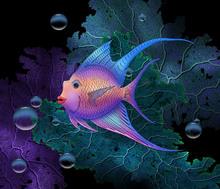 Wall mural - Lady Fish