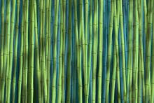 Wall mural - Bamboo Green