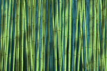 Wall Mural - Bamboo Green