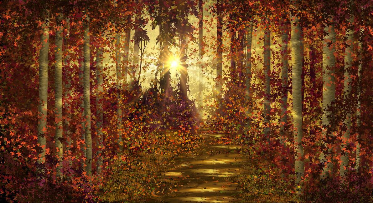 Forest trails wall mural photo wallpaper photowall for 1wall forest wallpaper mural