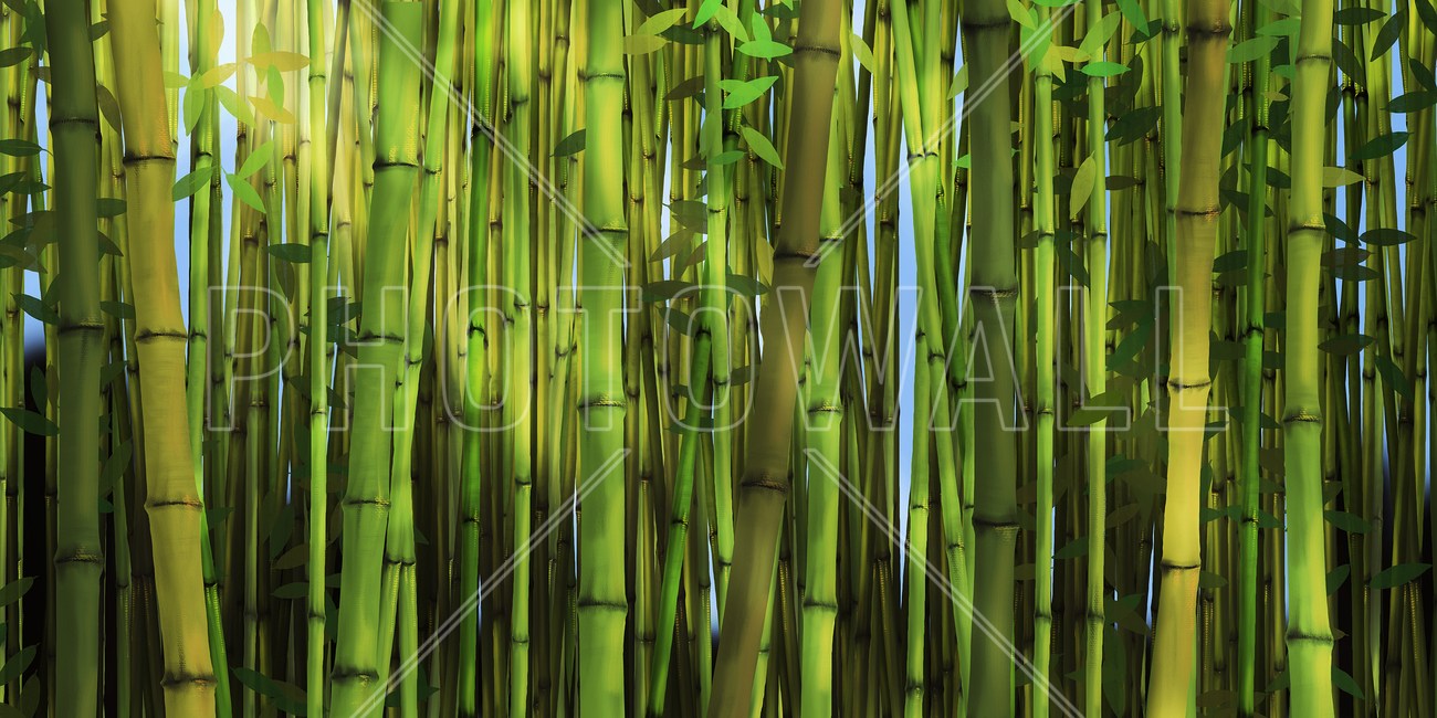 pics photos bamboo forest wall mural