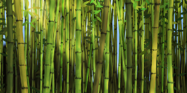Bamboo Forest Wall Mural Amp Photo Wallpaper Photowall