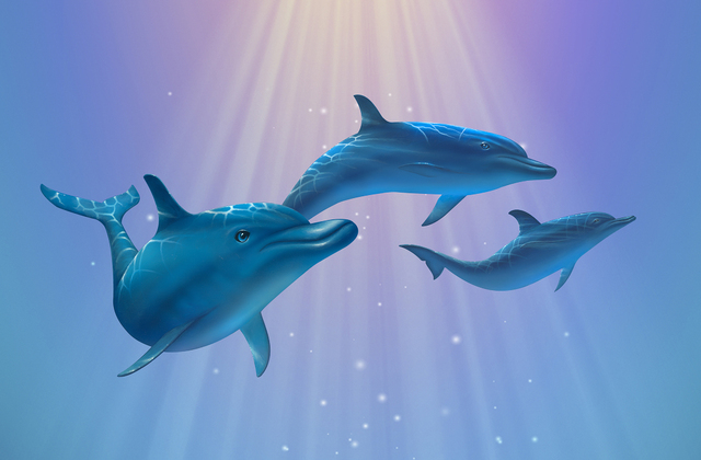 Dolphin light wall mural photo wallpaper photowall for Dolphin wall mural