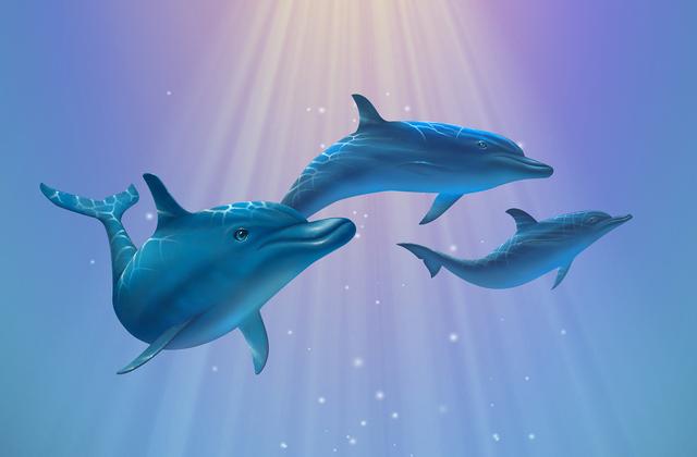 Dolphin light wall mural photo wallpaper photowall for Dolphin mural wallpaper
