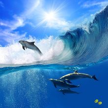 Fototapet - Dolphin in a Wave
