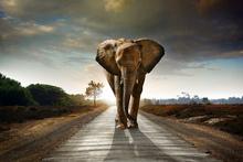 Fototapet - Elephant Road
