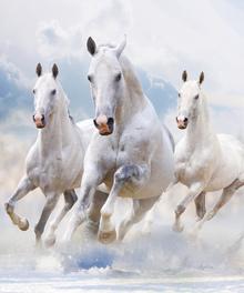 Wall mural - Sky Horses