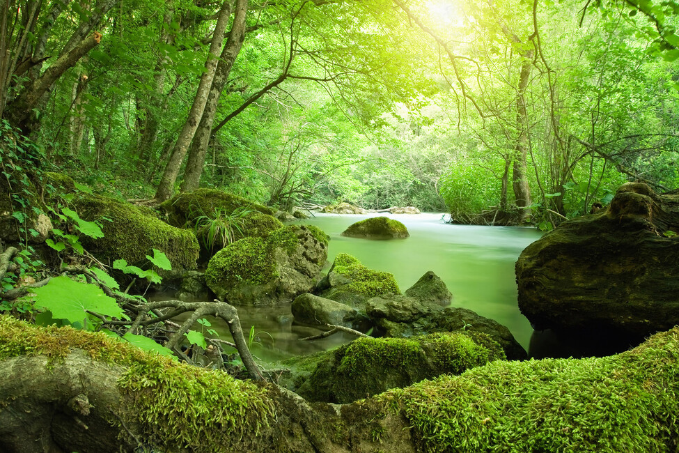 River In The Forest Wall Mural Amp Photo Wallpaper Photowall