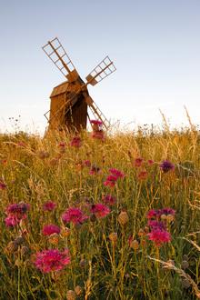 Fototapet - Grainy Windmill